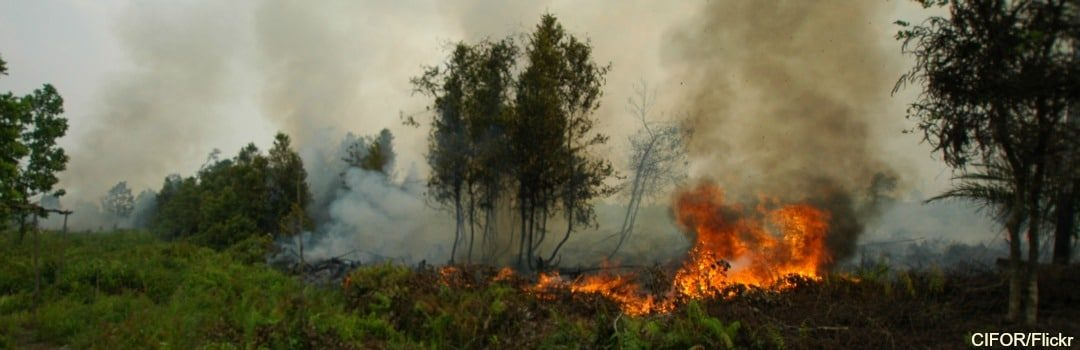 Fires Burn Again in Indonesia