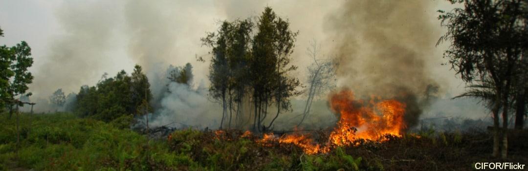Fires Burn Again in Indonesia