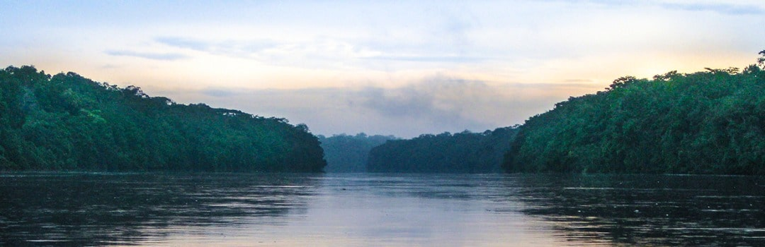 Conservation Success in the Congo Basin