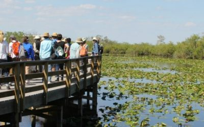 Rachel's Network Champions Resilience in the Everglades