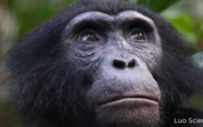 The Human Element in Conservation in the Congo