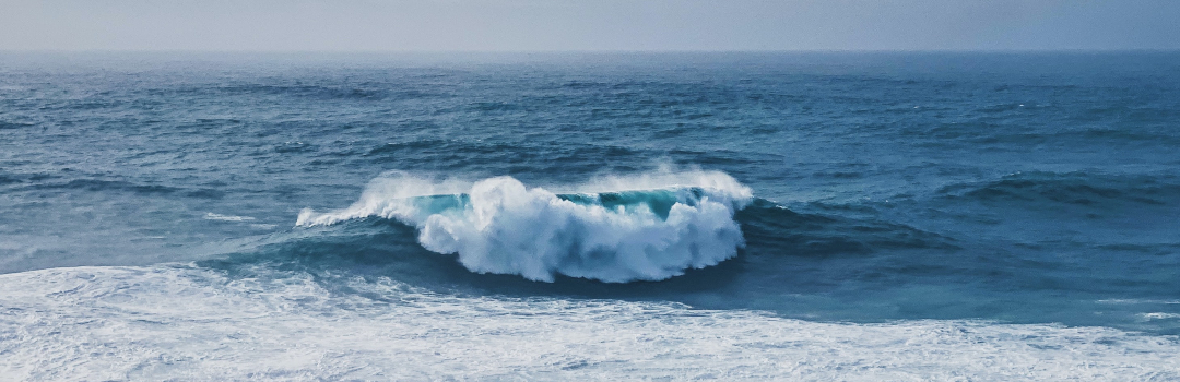 Members Share a Passion for Oceans